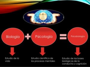 psicobiologia-1
