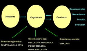 psicobiologia-concepto